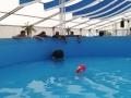 aufbau-pool-2